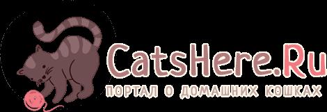 Логотип Catshere.ru