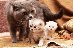 Кошка и ее котята