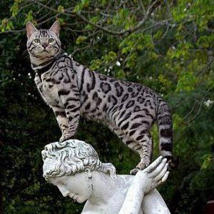 Кошка на статуе