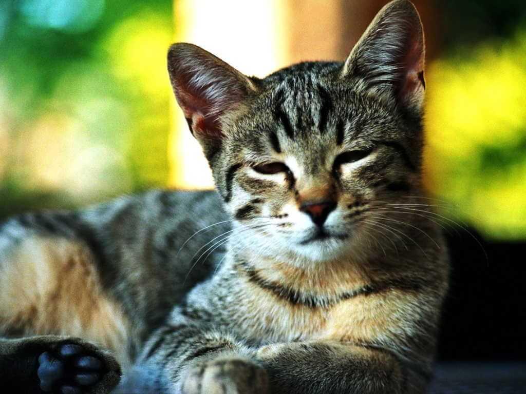 Кошка ничего не ест много пьет или не пьет что делать