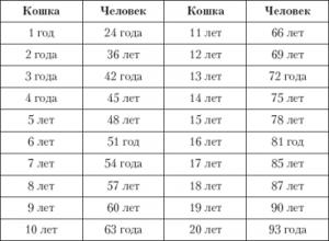Таблица возрастов кошки и человека