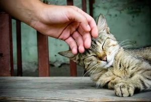 Кошка становится более ласковой