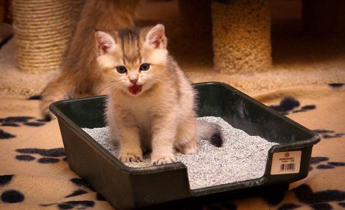 Выбор лотка для котенка
