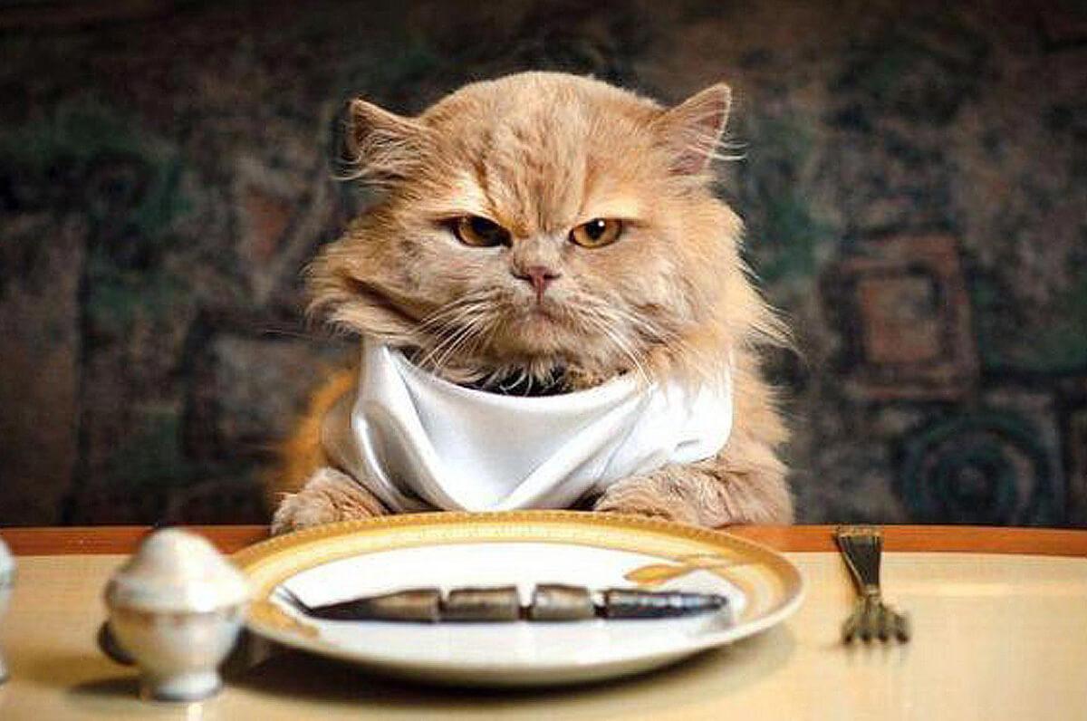 Корм для кошек премиум класса: рейтинг лучших
