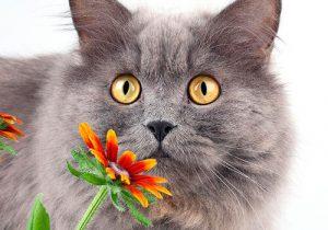 Аллергия у кота на цветок