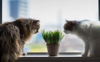 Коты и горшок с растением