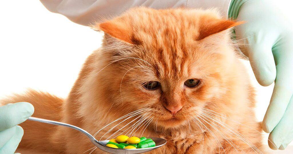 Что делать если отравилась кошка и ничего не ест