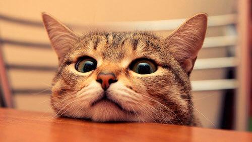 Гноение глаз у котенка: