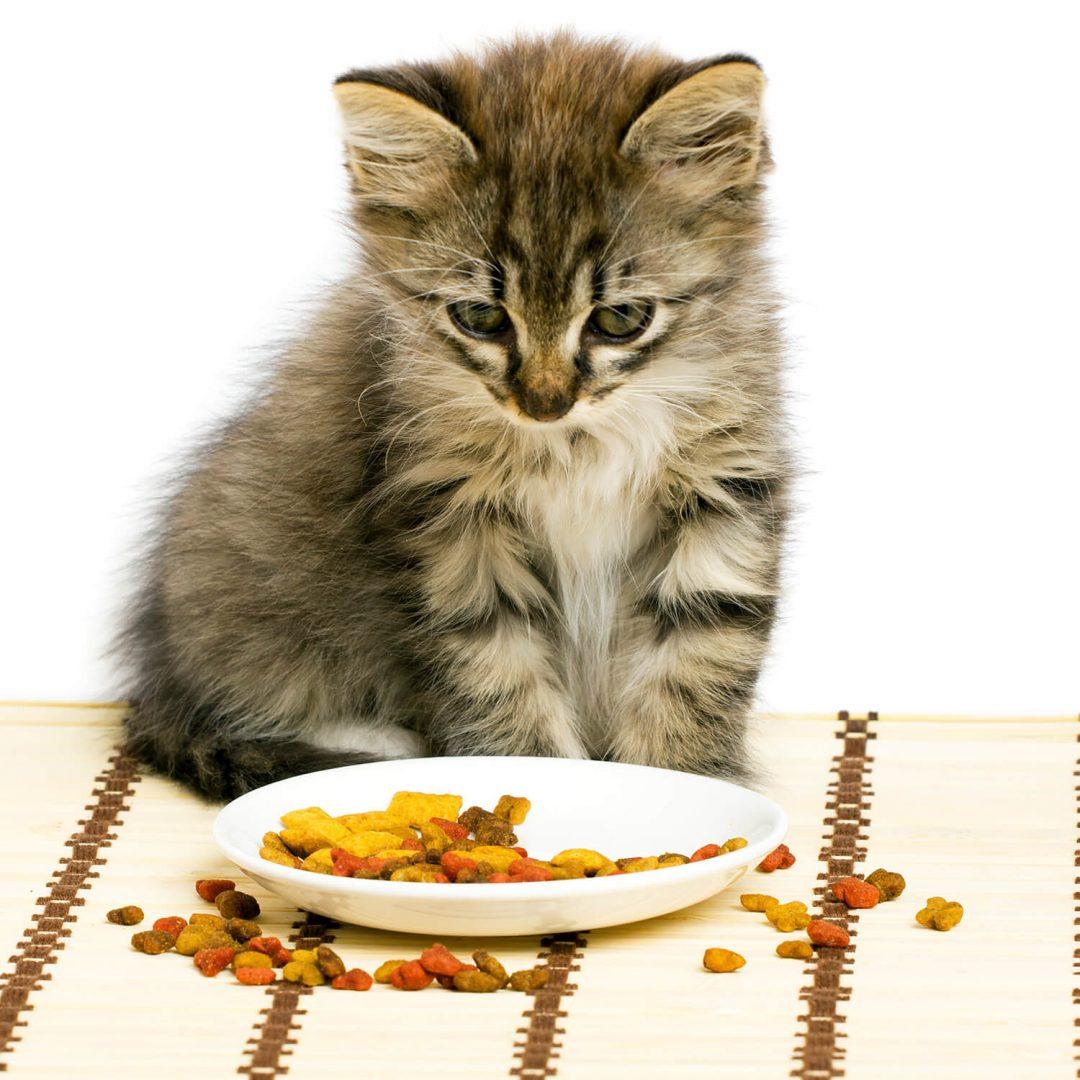 Кот ест сухой корм