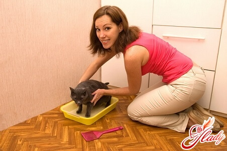 Выбор места для лотка котенку