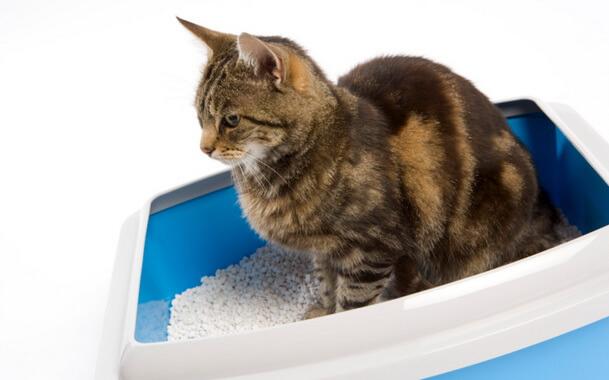 Чем лечить понос у кошки