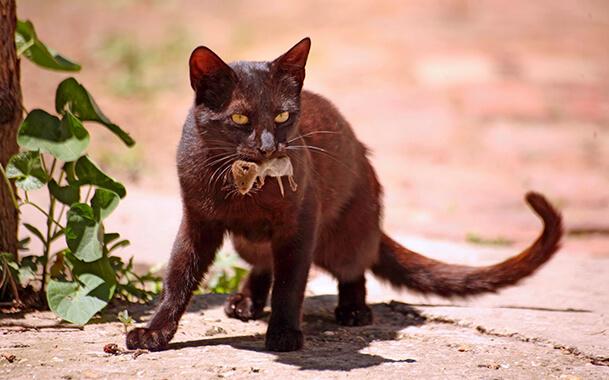 Кошка съела мышь с отравой