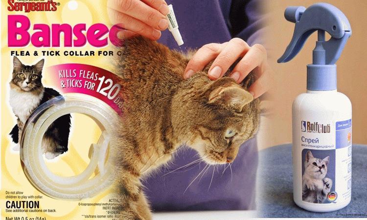 Спрей против блох у кошки