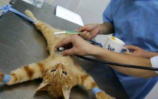 В каком возрасте нужно стерилизовать кошек