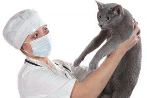 Диагностика вирусной лейкемии у кошки