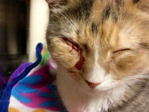 Последствия ринотрахеита у кошек