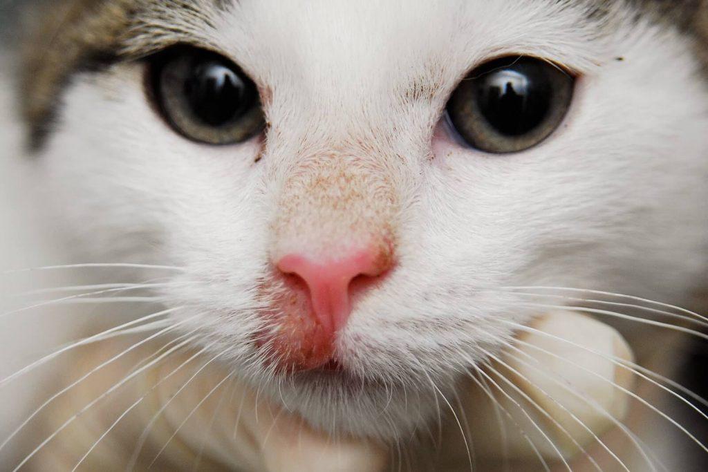 Лечение лишая у кота