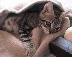 Подавленный котенок