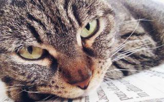 Лечение короновирусной инфекции у кошек