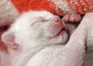 Котенок не открыл глаз