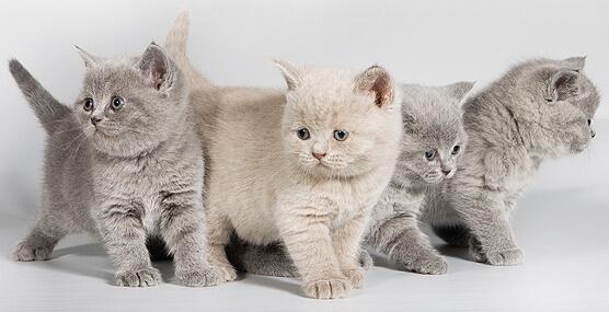 Имена для кошек: подбор необычных кличек по разным критериямИмена для кошек: подбор необычных кличек по разным критериям