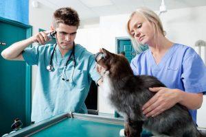 Профилактика эпилепсии у кота