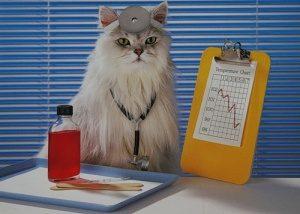 Лечение опухоли у кошки