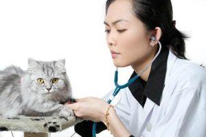 Выясняем причины отёка легких у кошки
