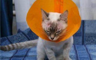 Кот болеет экземой