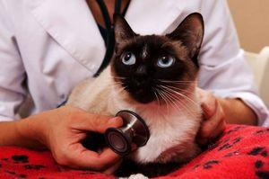 Лечение астмы у кошки