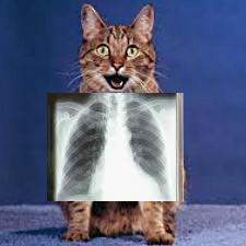 Кошка и рентген