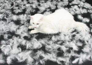 Беременная кошка с линькой