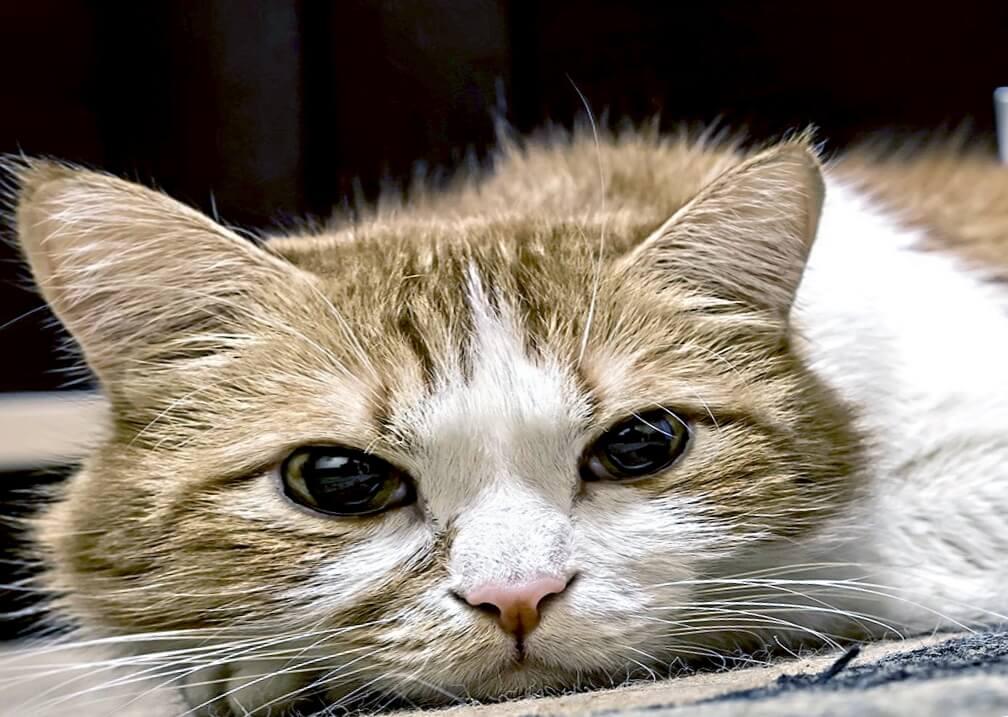 Подавленная кошка