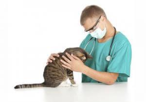 Выясняем причины эпилепсии у кошек