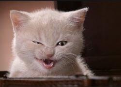 Стоматит у котенка