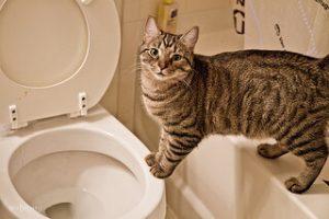 Цистит у котов