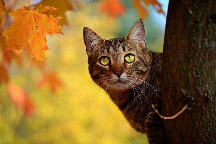 Простуда у кошек: симптоматика и лечение