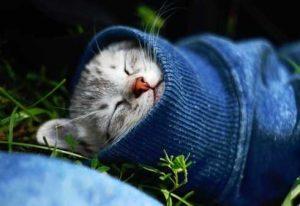 Кошка в покое при простуде