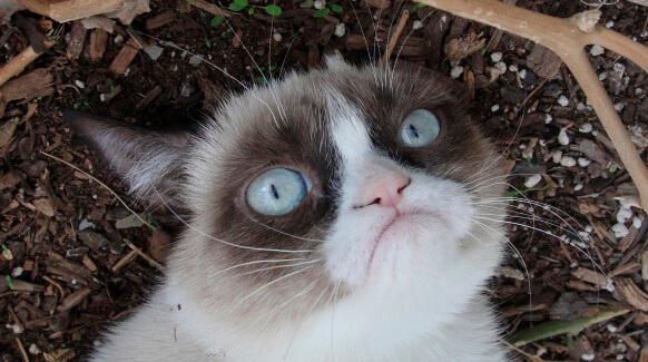 Кошка с запором
