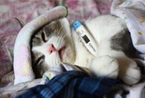 Лечение простуды у кошки препаратами