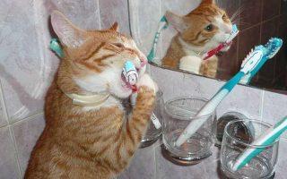 Зубной камень у кота