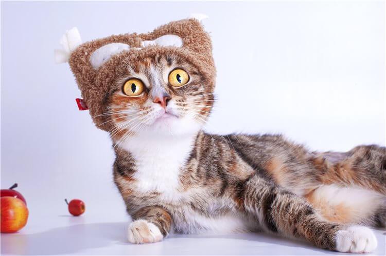 Здоровье короткошерстной кошки