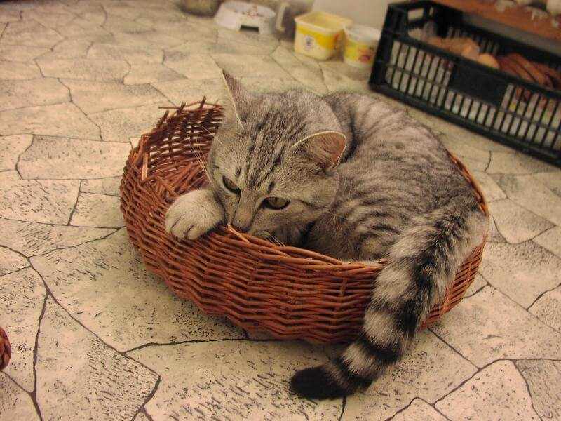 Характер кошки и темперамент