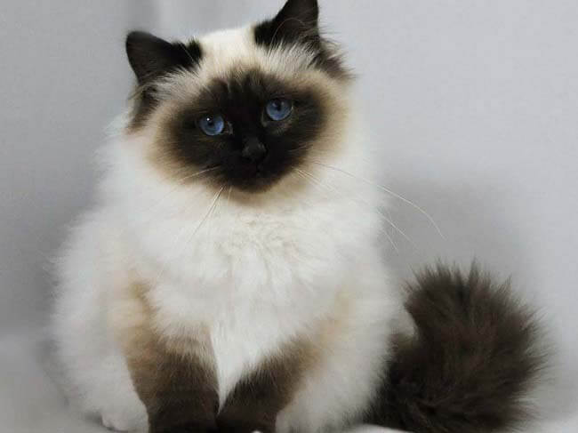 Котенок кошки