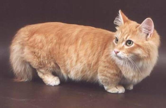 Прогибающийся кот