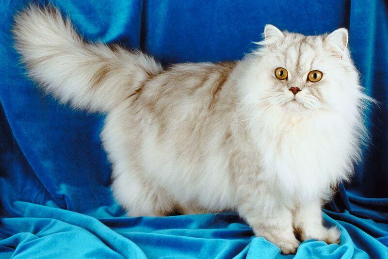 10 vicces fotó macskákról, akik teljesen máshogy értelmezik a kényelem fogalmát