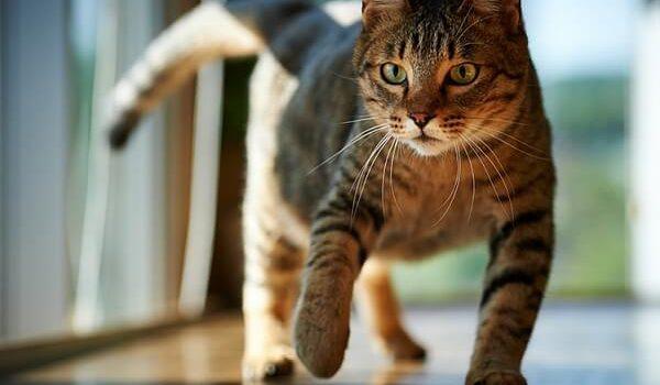 Убираем привычку кота гадить в неположенном месте