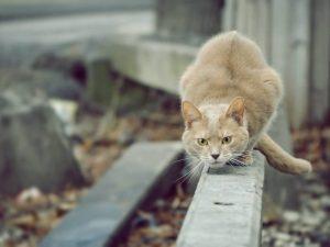 Кот на охоте