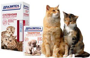 празител и кошки