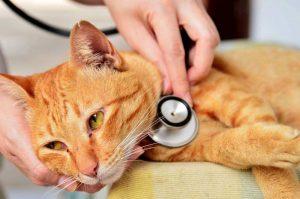 кошка с чумкой